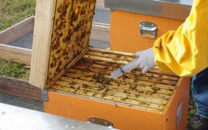 Обработка пчел бипином: инструкция и дозировка