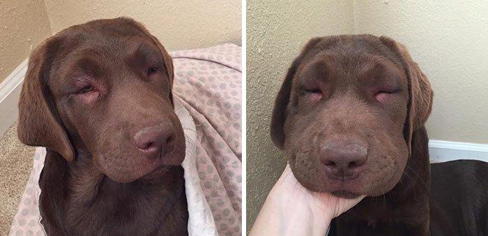 Что делать, когда вас укусила собака