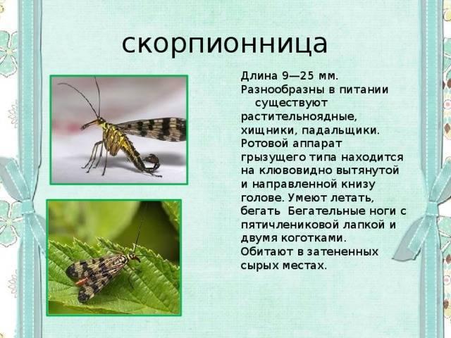Характер и воспитание ребенка скорпиона ♏ ~ блог о детях