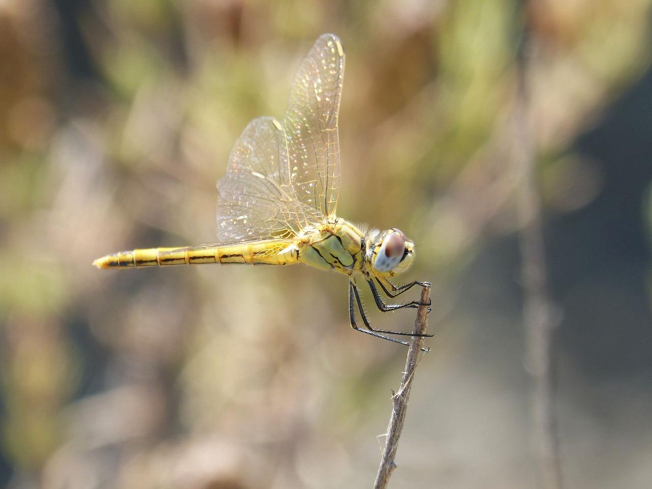 Интересные факты о стрекозах, фото и видео  - «как и почему»