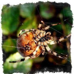 Почему нельзя убивать пауков в доме: народные приметы и их значения, как избежать негативных последствий, если случайно раздавил.