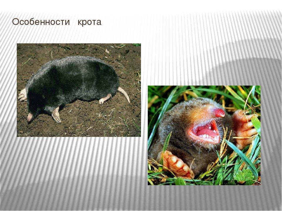 Презентация на тему «приспособленность организмов к среде обитания»