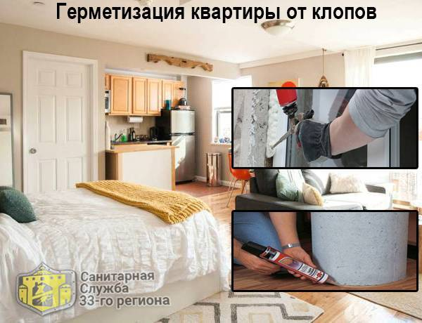 Клопы у соседей: что делать и как защитить свою квартиру