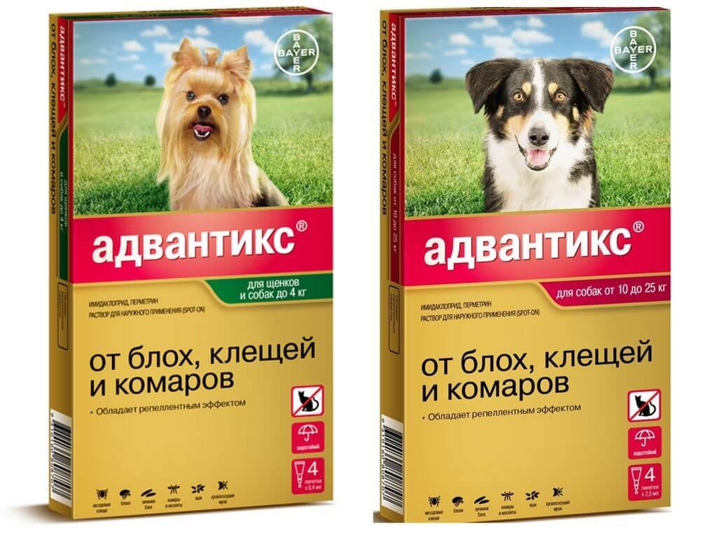 «адвантикс» для собак: как применять капли?
