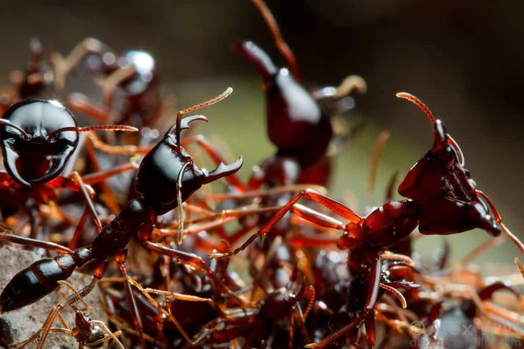 Топ-10 самых больших муравьев в мире
