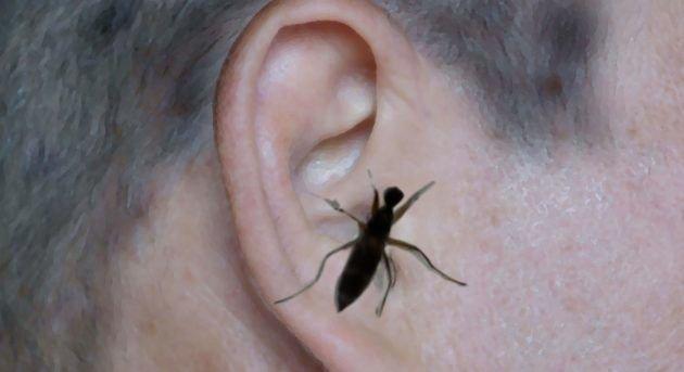 Что делать если в ухо залетела мошка, как вытащить муху в домашних условиях?