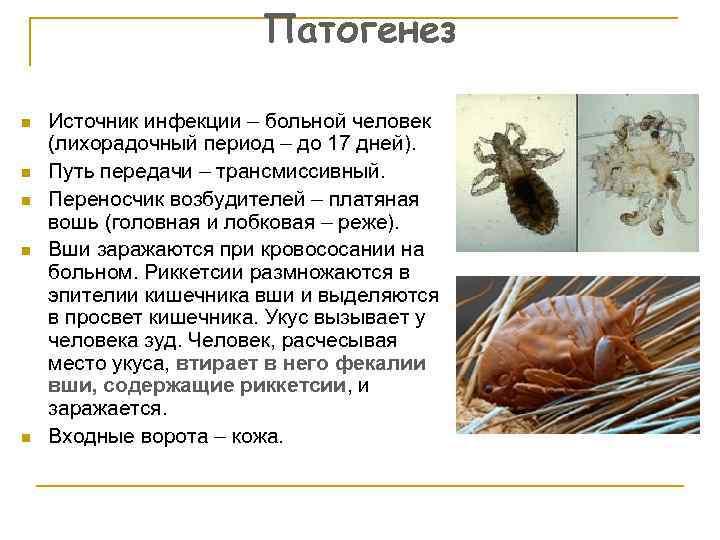 Педикулез. причины, симптомы и признаки, средства для лечения патологии, профилактика :: polismed.com