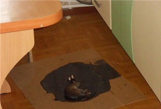 Как использовать клей от мышей и как его потом отмыть?