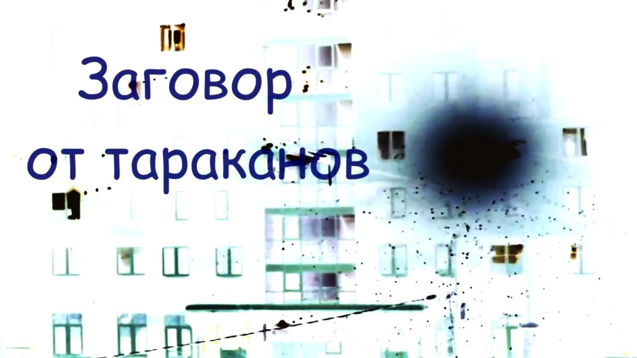 Заговоры от тараканов: быстрая помощь от насекомых - всё просто sunami.ru