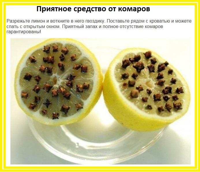 Гвоздика от комаров: как применять в домашних условиях