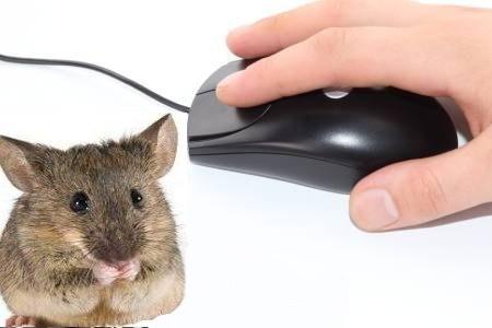 Избавляемся от мышей в квартире