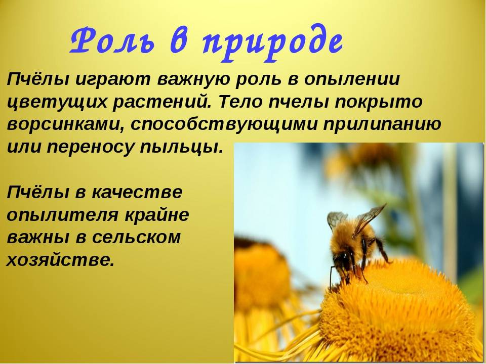 Для чего нужны в природе осы?  - животные и растения - вопросы и ответы