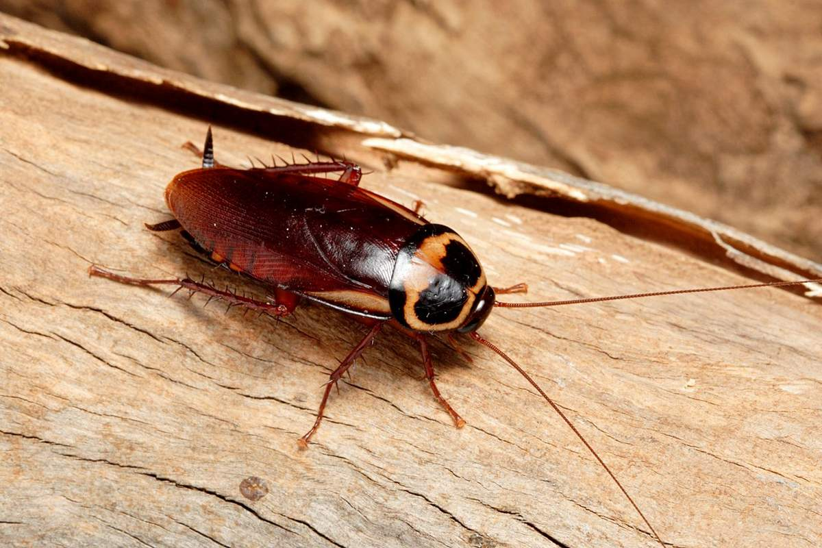 19 удивительных фактов о тараканах