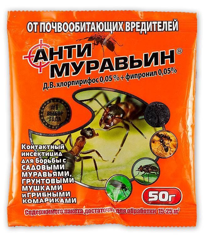 Почему муравьи боятся пшена и как правильно его использовать в борьбе с этими насекомыми