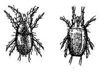 Какие виды клещей бывают и что важно о них знать?