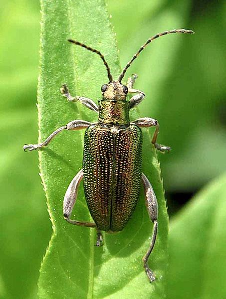Насекомые жуки: виды жуков, чем питаются, где обитают