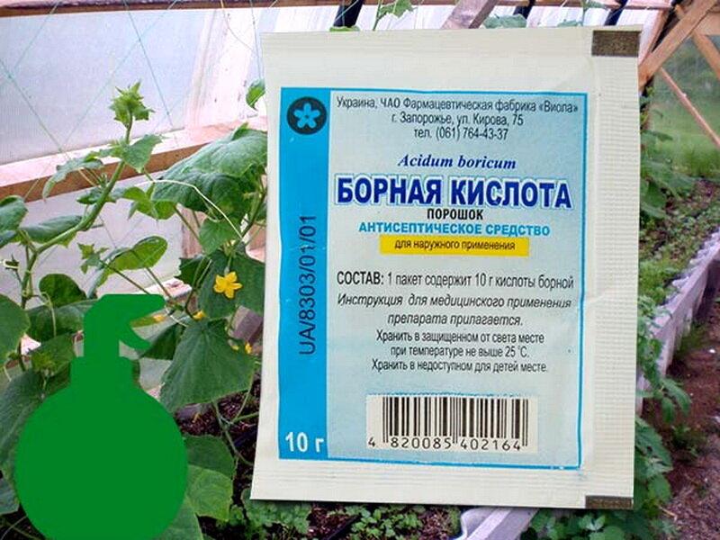 Борная кислота от муравьёв в огороде и дома: как действует, рецепты, меры предосторожности