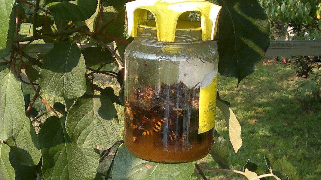 Ловушки для пчел своими руками: чертежи и размеры, как сделать из бутылки (фанеры), где ставить?