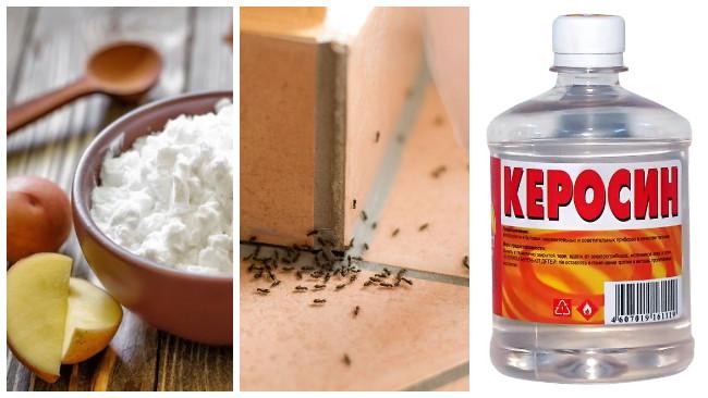 Как избавиться от муравьев на огороде навсегда: народными средствами