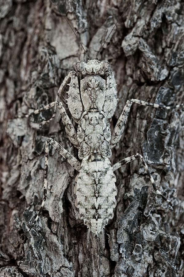 Самая интересная информация про насекомое богомол. богомол обыкновенный – живая ловушка для насекомых