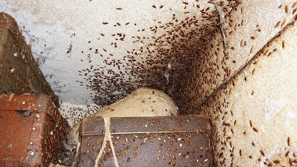 Где живут и где прячутся тараканы в квартире?