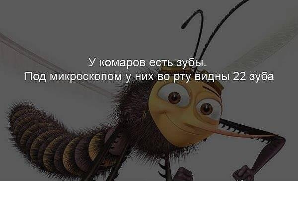 Когда появляются комары и откуда берутся они