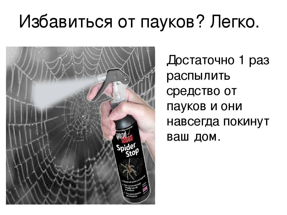 Как и чем вывести пауков из частного дома или квартиры