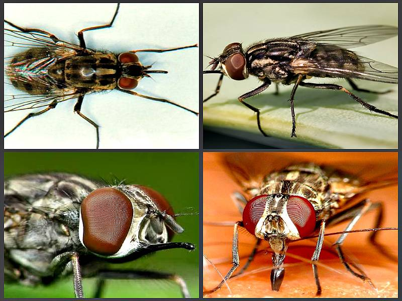 Почему комары кусают и почему их укусы чешутся? описание, фото и видео  - «как и почему»