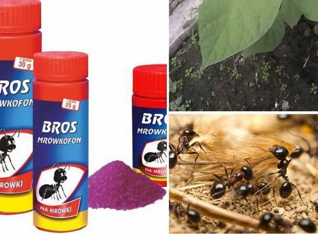 Как использовать средство от муравьев bros