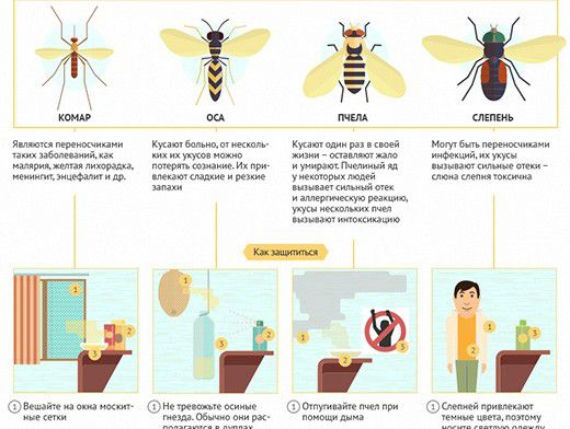 Что делать, если укусила пчела или оса? :: инфониак