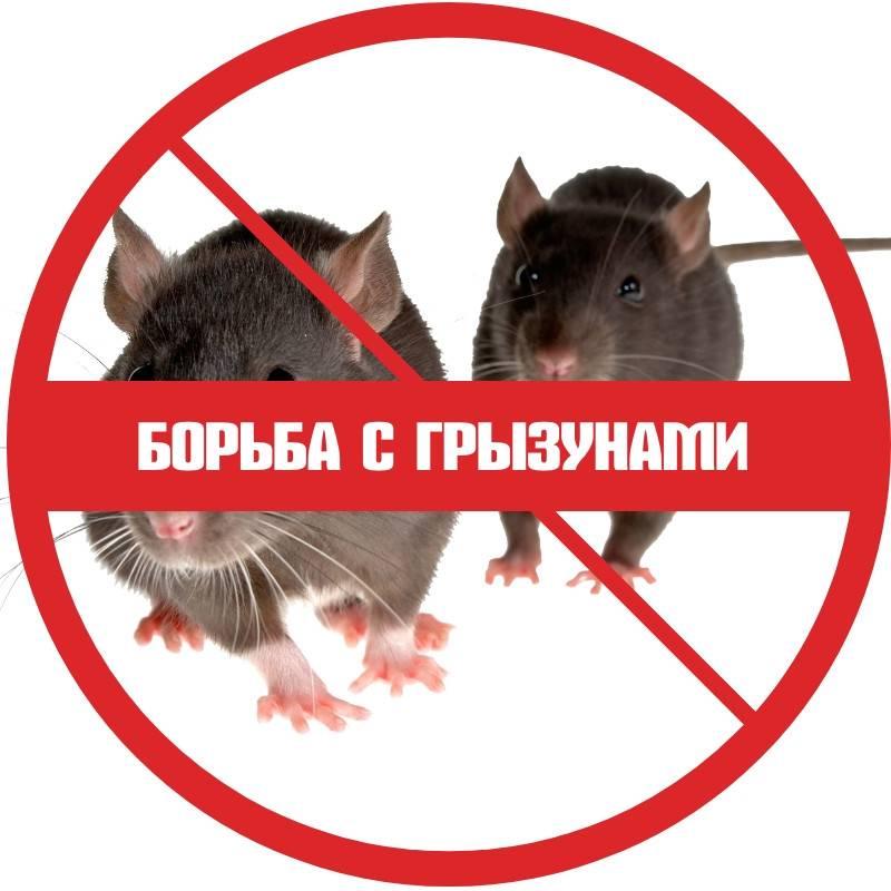 Уничтожение крыс - официальная сэс москвы и области