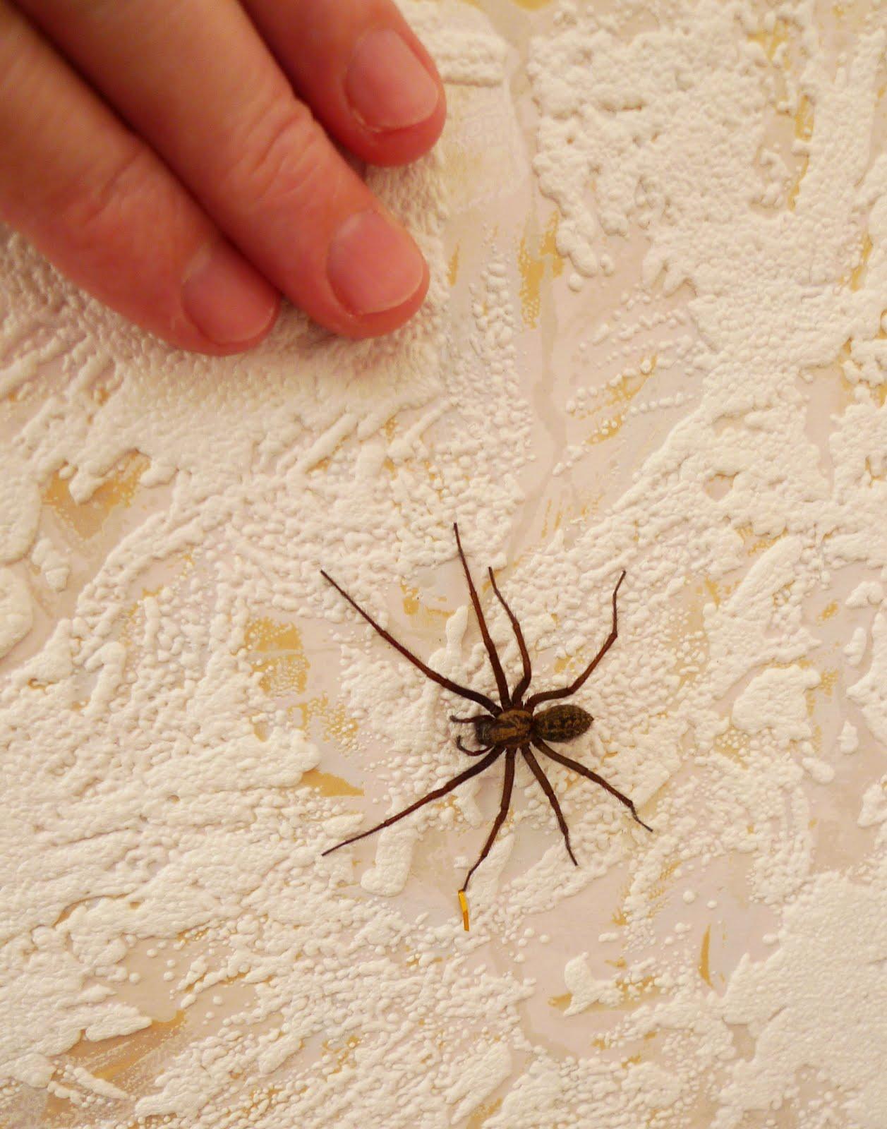 Как избавиться в доме от пауков доступными средствами – 11 способов