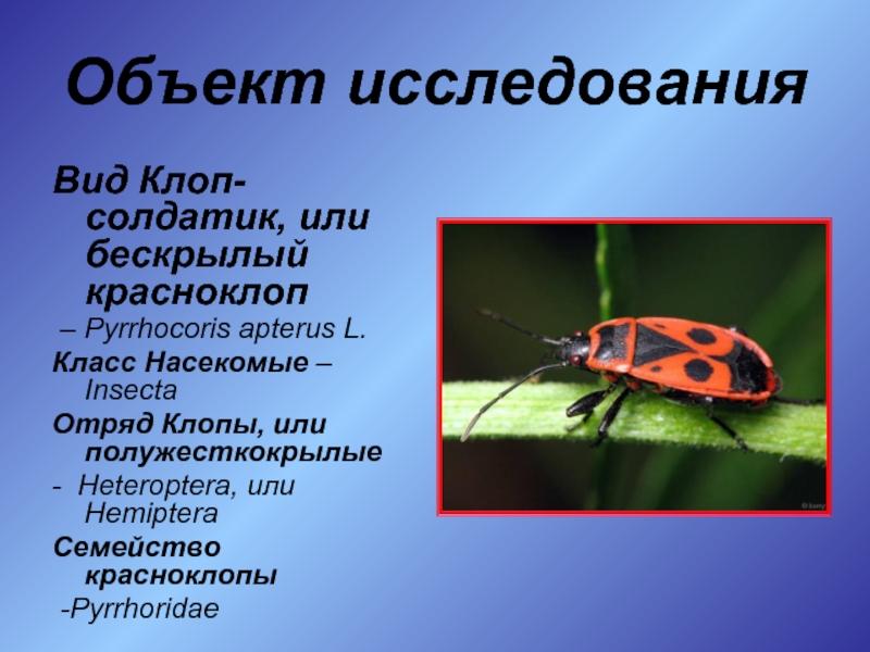 Шестилапые красноармейцы. почему клопов-солдатиков называют жуками. новости общества