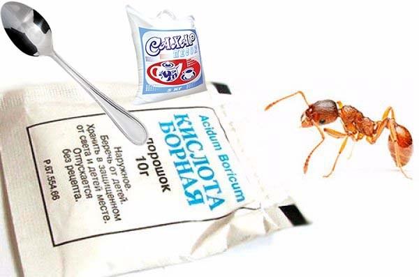 Борная кислота от муравьев: эффективные и безопасные методы борьбы с насекомыми