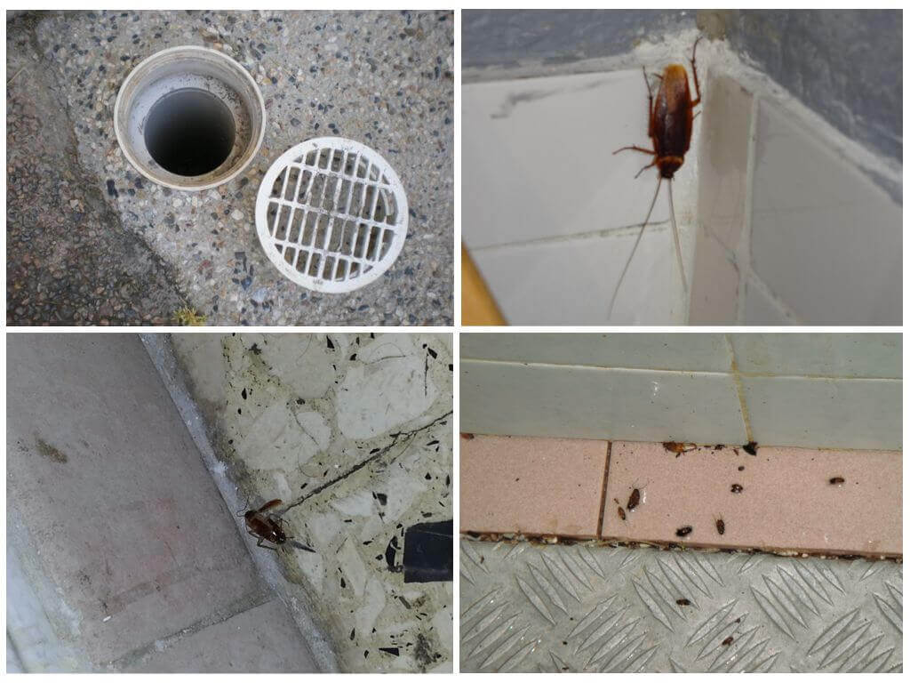 Откуда берутся тараканы в частном доме и как с ними бороться?
