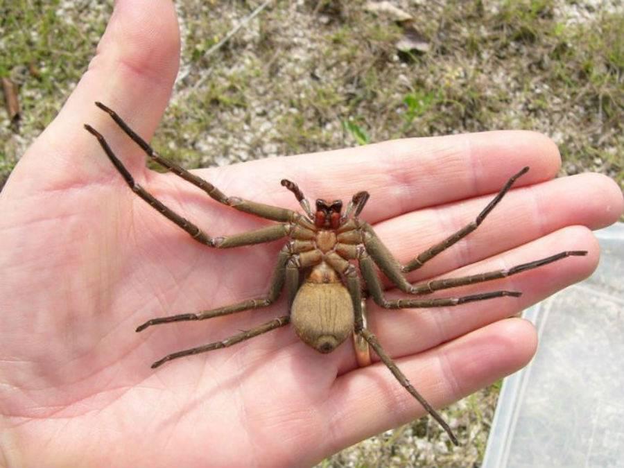 Самые большие пауки в мире - liketotravel.ru