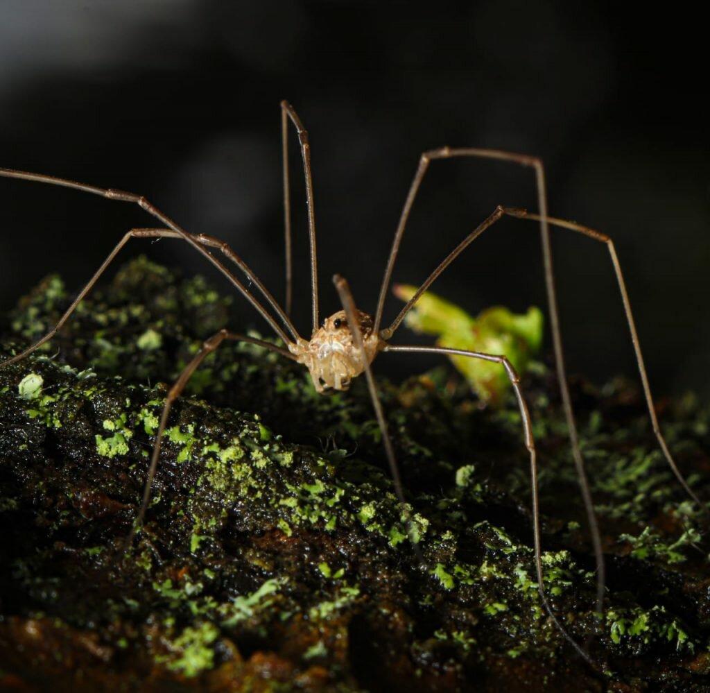 Что едят пауки