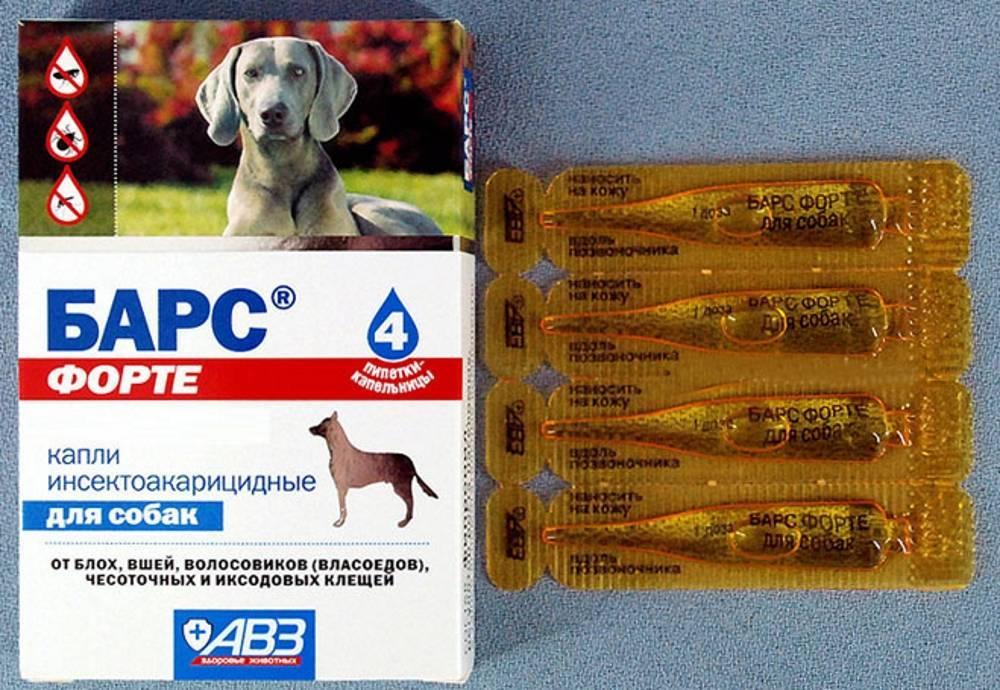 Барс форте (капли) для кошек и собак   отзывы о применении препаратов для животных от ветеринаров и заводчиков