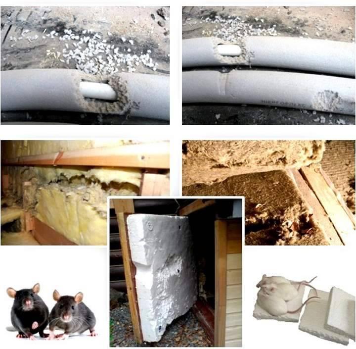 Мыши в каркасном доме: топ эффективных методов избавления