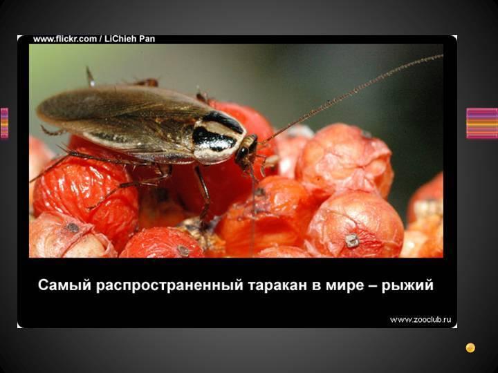 Для чего нужны тараканы