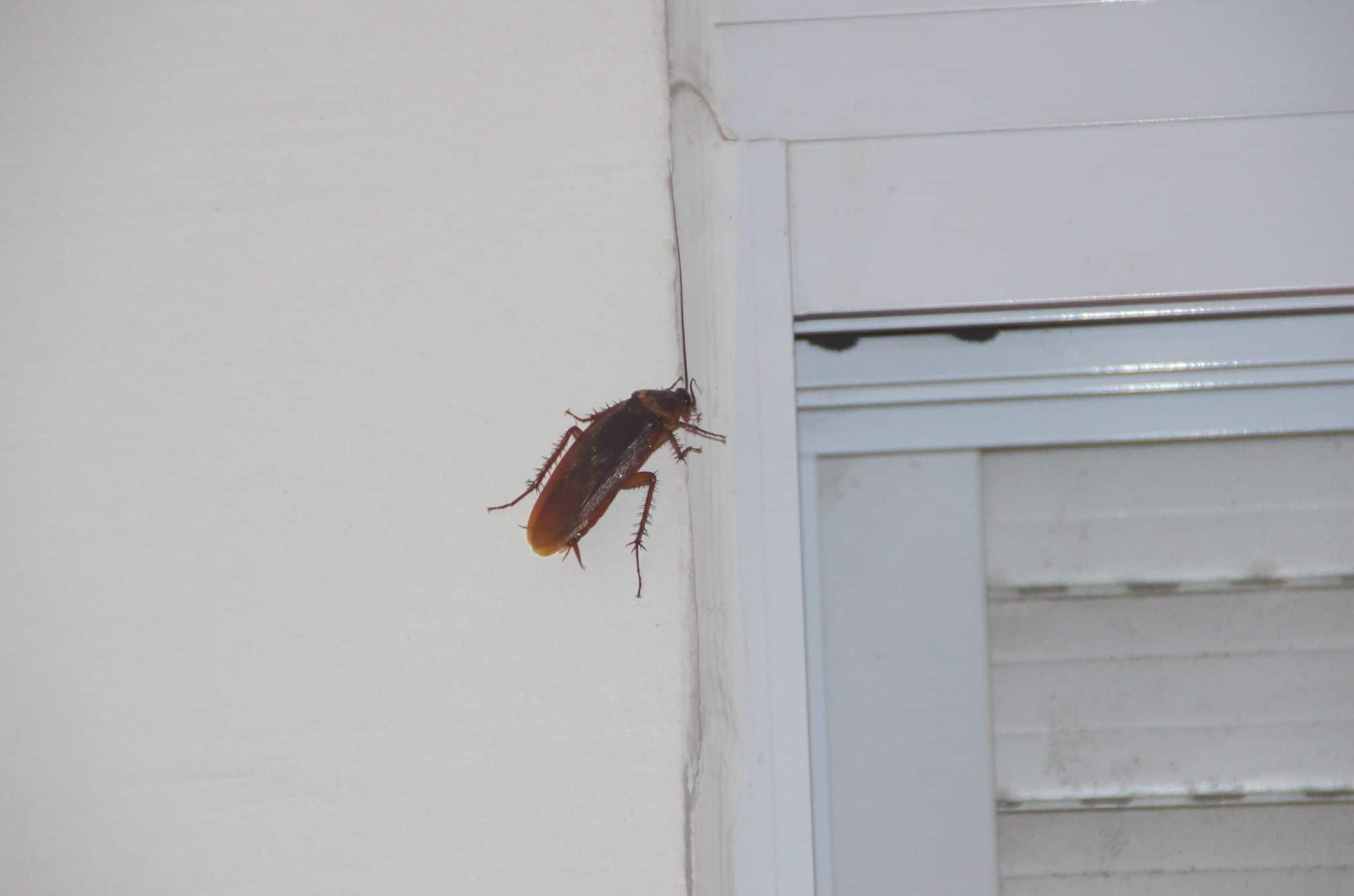 Где живут тараканы в доме. как найти ихгнездо, на что обратить внимание?