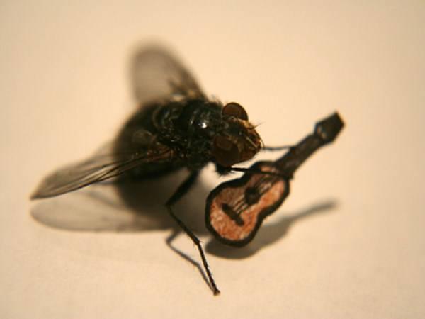 Муха на потолке как она держится там. исследовательская работа на тему » почему муха не падает с потолка». почему муха не падает с потолка