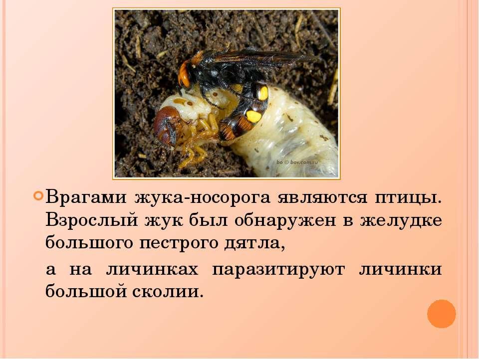 Жук носорог в доме как избавиться. как избавиться от жуков — «vexsi» журнал — обо всём!