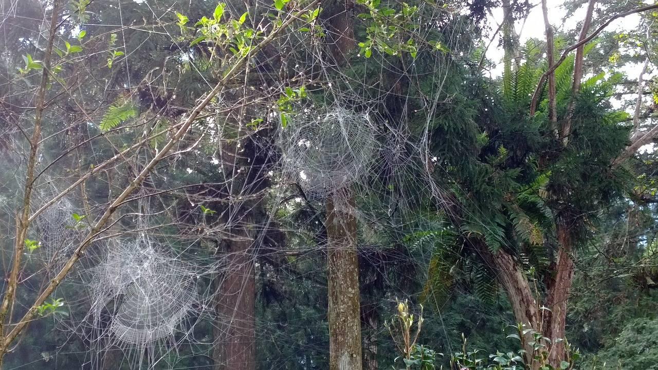 Как избавиться от летучих мышей на балконе и опасны ли эти зверьки для человека