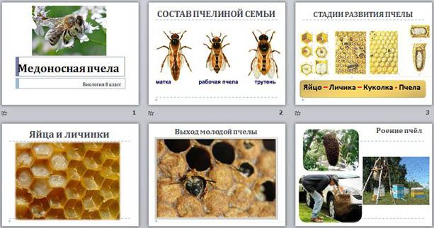 Особенности медоносных пчёл