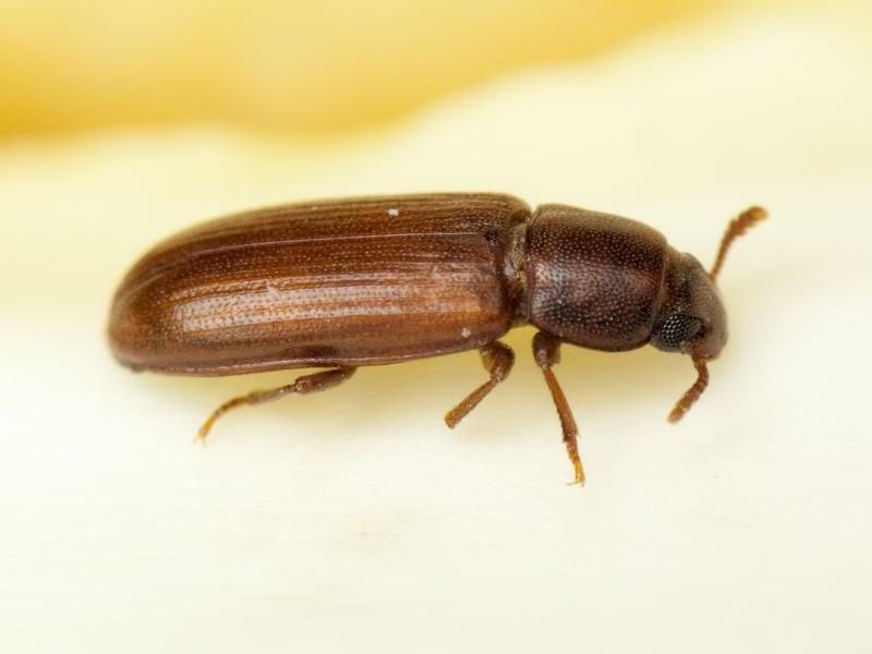 Как избавить дом от жуков: инструкция по ликвидации вредителей