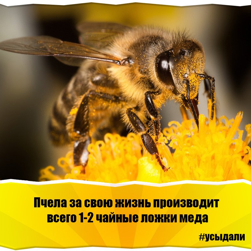 Интересные факты о пчелах, осах и шмелях: видео и фото интересные факты о пчелах, осах и шмелях: видео и фото