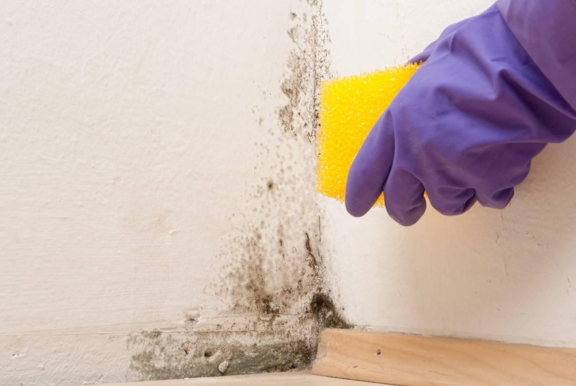 Сырость и плесень в квартире: способы удаления, профилактика