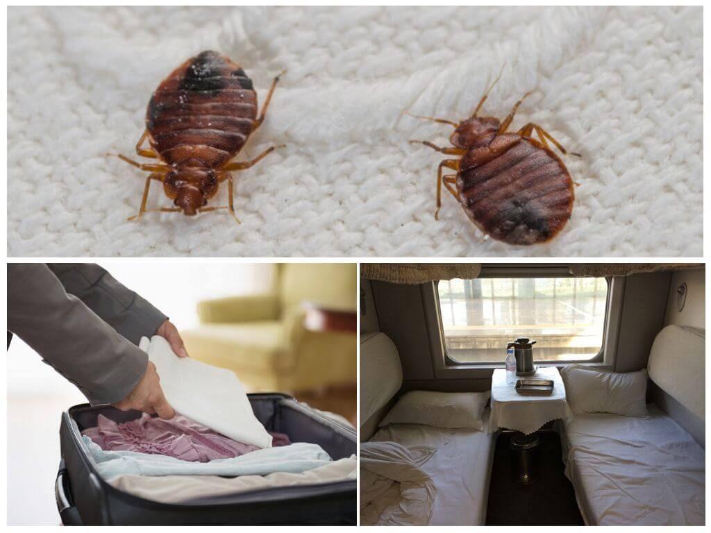 Как выбрать порошок от постельных клопов - 6 видов с запахом и без