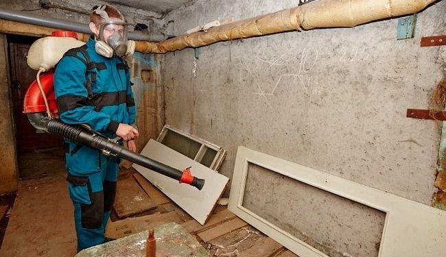 Как уничтожить подвальных блох: чем опасны насекомые, средства для дезинсекции дома, препараты для животных